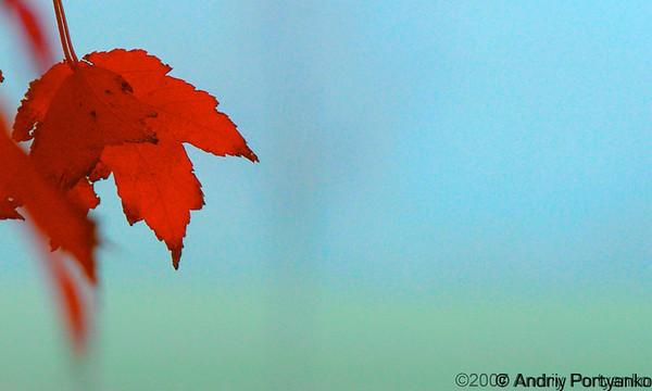 Fall (1).jpg