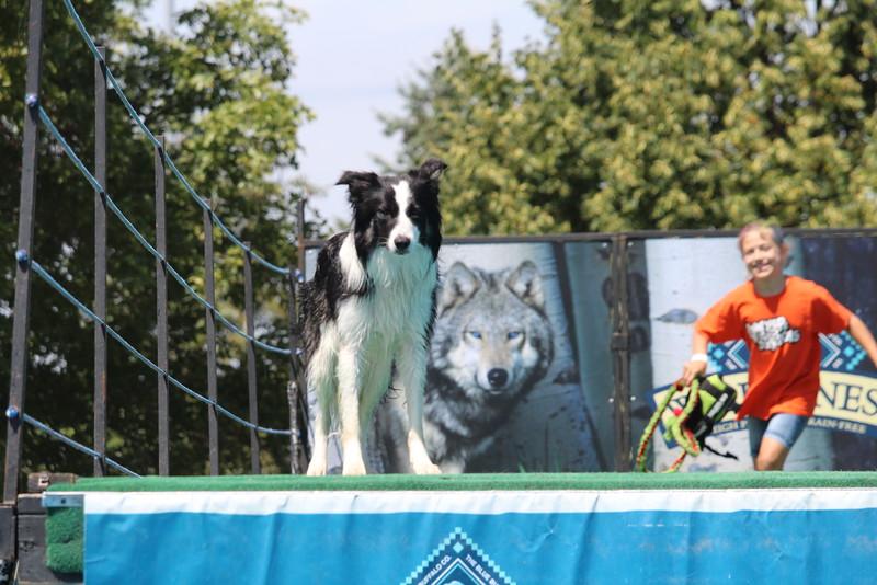 2015.8.6 Winnebago County Fair Dock Dogs (16).JPG
