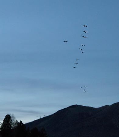 Flagstaff Birds