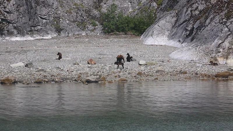 glacier bay_20120810_8414.MOV