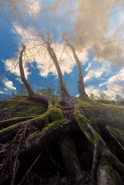 NearForest (1 of 1).jpg
