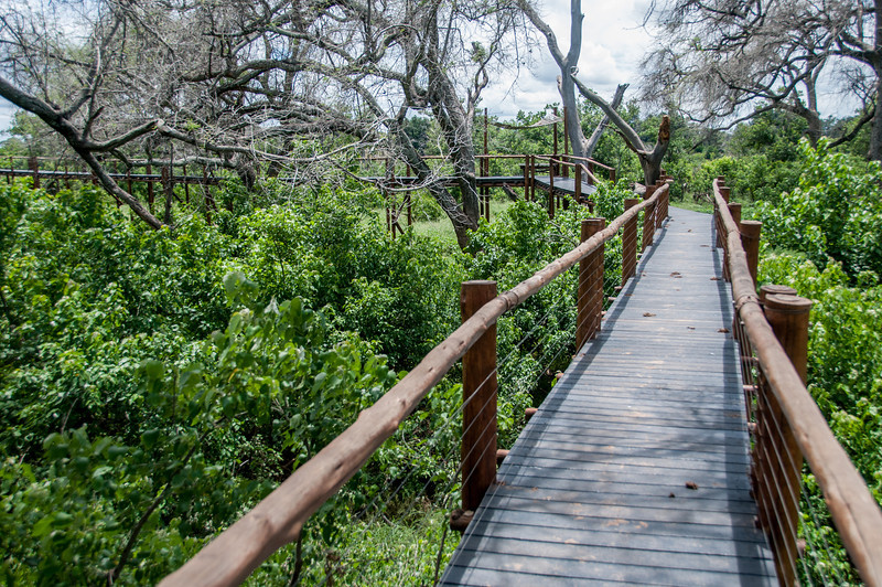 Bridge at Mapungubwe National Park, Limpopo