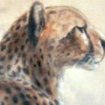 cheetah styles