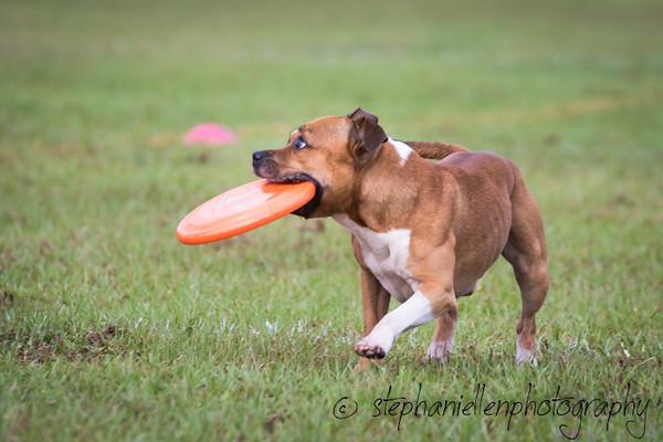 _MG_2240Up_dog_International_2016_StephaniellenPhotography.jpg