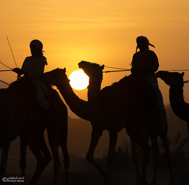 IMGL9296 copy- Camel Race.jpg