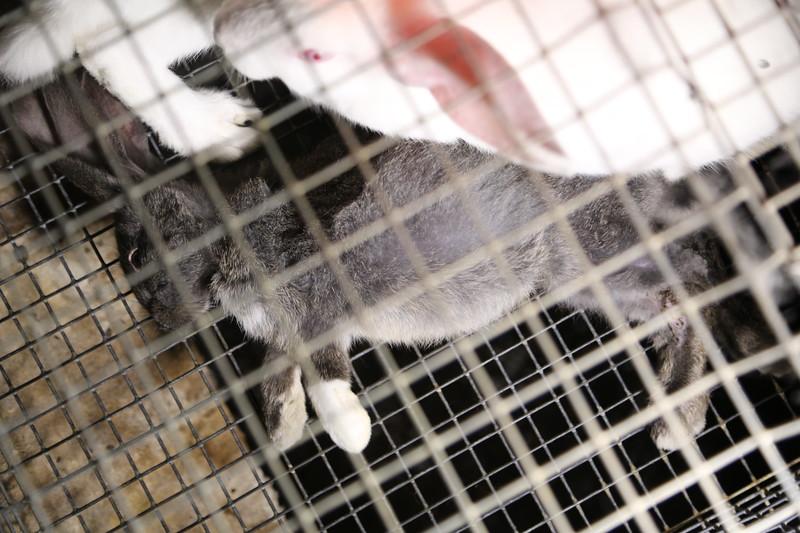007-lapins-mortalité-france-2012-2013.jpg