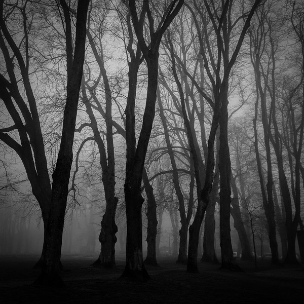 Fog at dawn in Bayeux