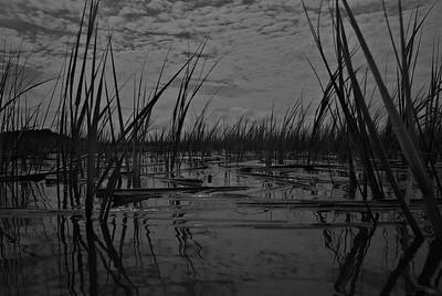 Murrells Marsh