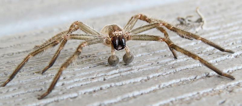 Spider on porch.jpg