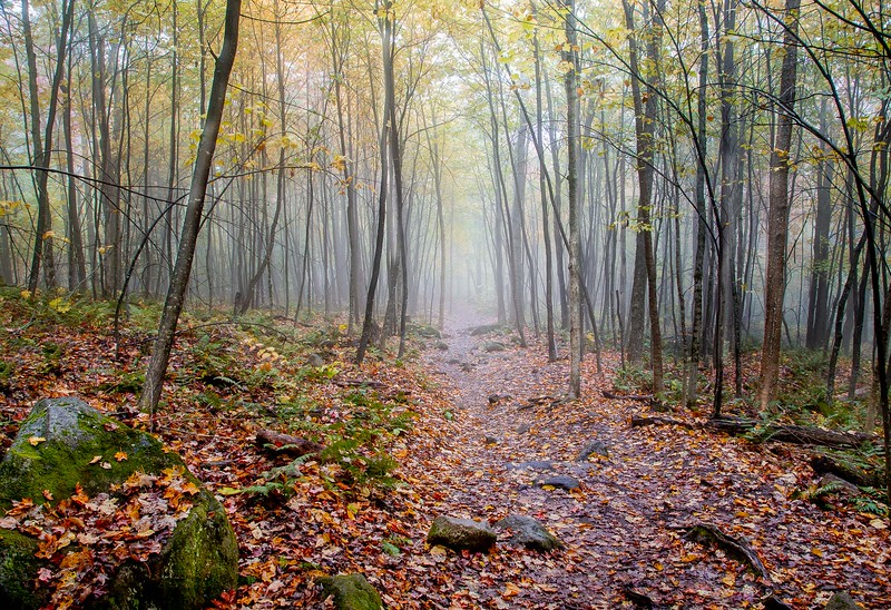 Rick Ohnsman.The Fog and the Forest.jpg