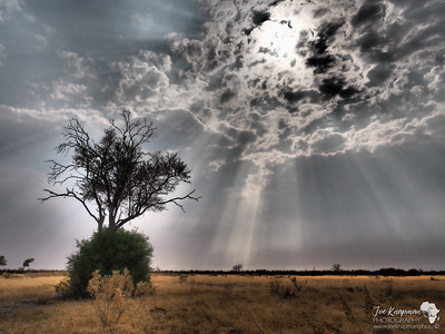 Dramatic Rays over Botswana's dry marshes