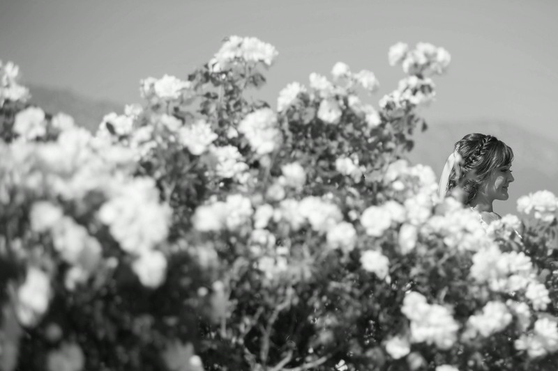 serendipity garden weddings by David and Tania Photography-2-2.jpg