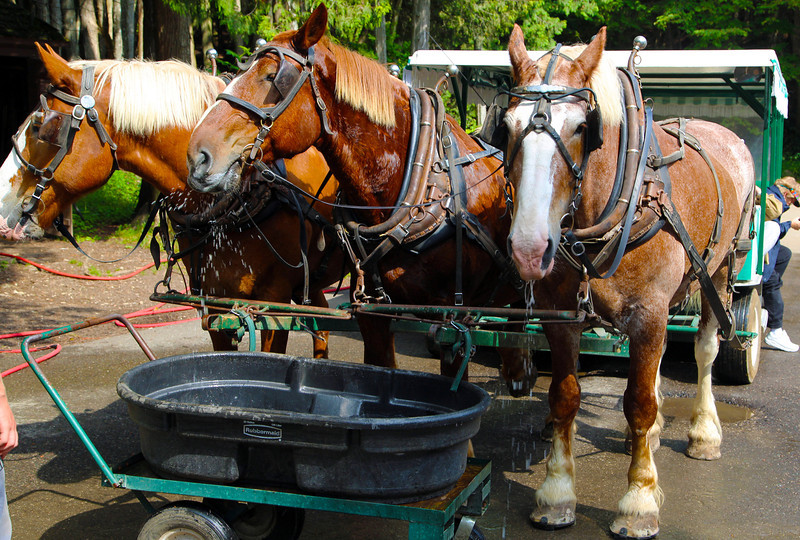 Our horses stop for water ...