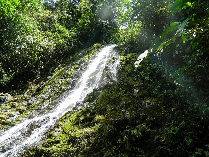Urari-Panama-25.jpg