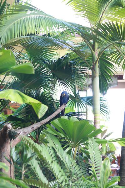 Kauai_D5_AM 224.jpg