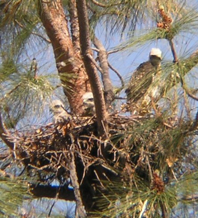 olympus digital: April 30, 2004: 2004 was a tremendously successful season with three hatchlings