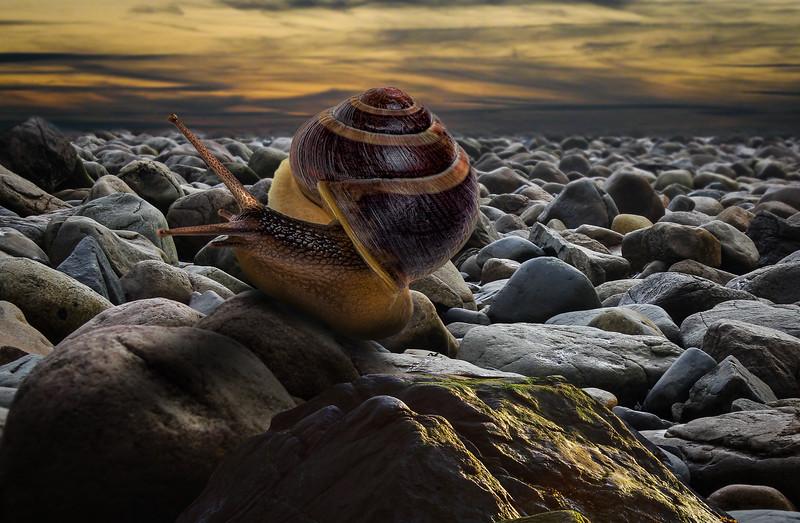 snail-lr-1.jpg