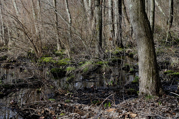 Saulter's Pond / Cushman Farm 03-21-20