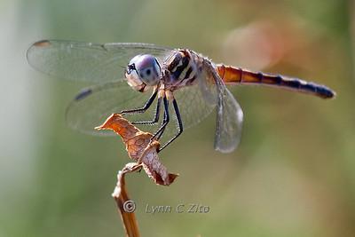 Butterflys & Dragonflys