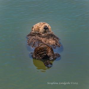 Seals & Otters