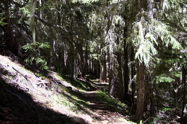 trail through the forest