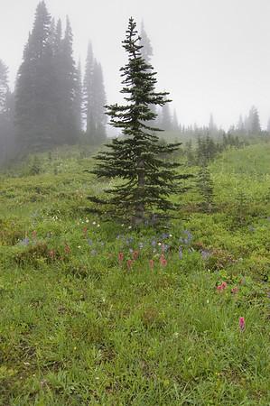 tree, flowers, fog
