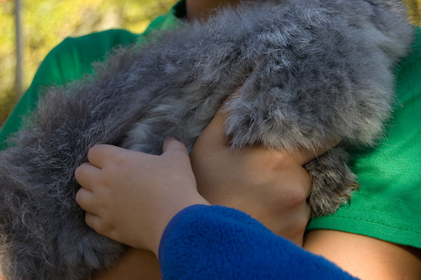 petting a rabbit