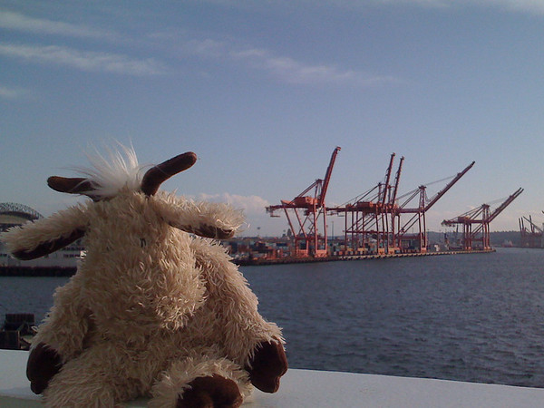 goat at port of seattle
