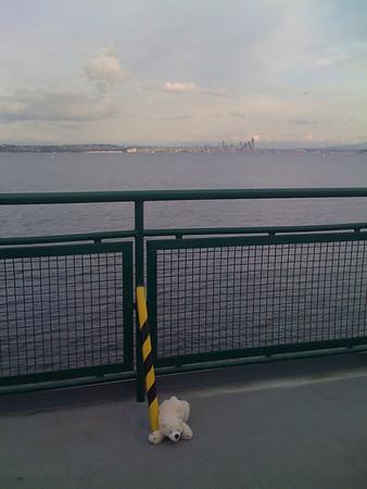 polar bear laying on the ferry floor