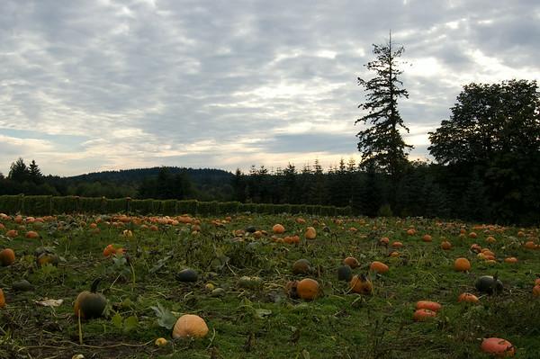 pumpkins, trees, sky