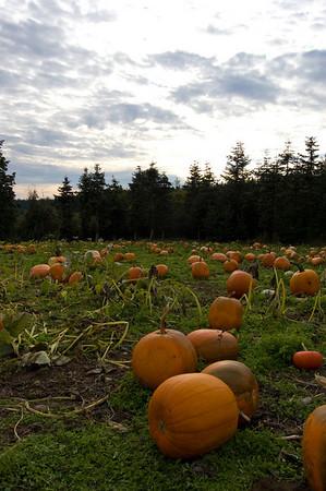 pumpkins and sky