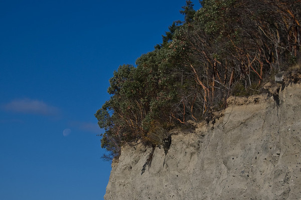 moon and madrone trees