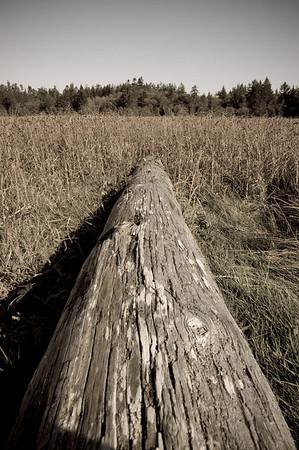 log leading to marsh