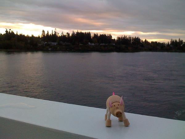 pig on railing