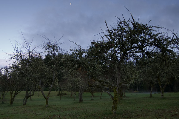 apples, moon, fog