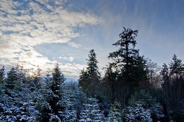 snow, trees, sky