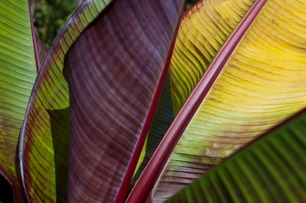 waves of color from a tropical plant